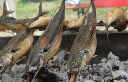 Makrela nad uhlím